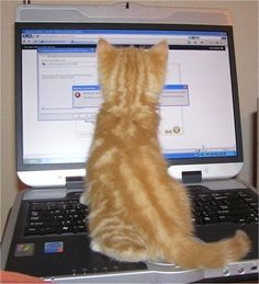 Webmaster kedi