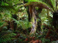 tropical rainforest - Google Search