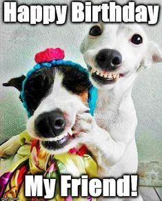 Happy Birthday Wishes For A Friend, Birthday Wishes Funny, Happy Birthday Messages, Card Birthday, Birthday Ideas, Happy Birthdays, Funny Birthday Message, Sister Birthday, Cute Birthday Meme