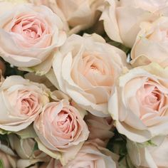 Find Spray Roses at FiftyFlowers! Spray Roses are miniature standard roses that have multiple small blooms per stem. Petite and beautiful, spray roses generally Pink Green Wedding, Pink Wedding Rings, Rose Wedding Bouquet, Blush Pink Weddings, Green Weddings, Dream Wedding, Wedding Flower Design, Beach Wedding Flowers, Wedding Colours