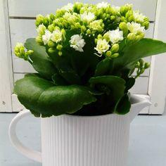 Mukavaa viikkoa!  #valkoinen #tulilatva # kannu #ikkuna #tammikuu #kevät #sisustaminen #liisako #vanhat tavarat #sisutuspuoti #vanhat esineet