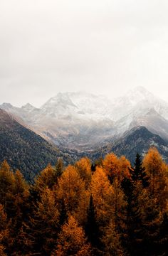 A wallpaper is a fun way to personalize your mobile phone as well as to inspire yourself. The perfect iPhone wallpaper pictures. Iphone Wallpaper Fall, Nature Wallpaper, Mountain Wallpaper, Nature Iphone Wallpaper, Wallpaper Gallery, Galaxy Wallpaper, Autumn Scenery, Autumn Trees, Autumn Nature
