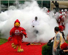 Cardinal Bird - Did You See That? - Photos - SI.com
