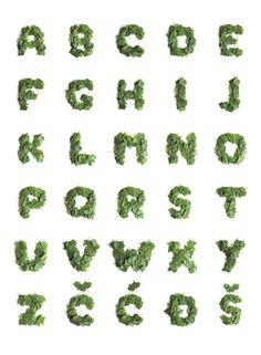 typography-alphabet-43_vladimirkoncar-green-leaves-typediary-typeproject01