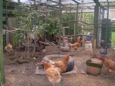 Image result for what to put in a chicken run