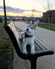"572 Likes, 10 Comments - Kaiyah the Husky (@alilhusky_kaiyah) on Instagram: ""Cheers to finally feeling like Spring . . . . @huskies @siberian_husky_world…"""