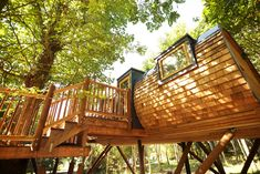 The Tree House Tale — Pickwell Manor