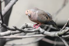 This image (View Nine) was featured in one of my posts on blogger re questions about young mourning doves AND informative answers are appreciated @ http://www.thelastleafgardener.com/2013/06/an-open-letter-re-young-mourning-doves.html!