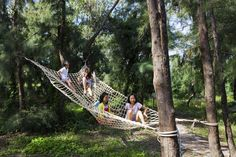 Dragonfly Park, Hoi An, Vietnam | Integrating these kinds of hammock nets into an orchard cage could create a multifunctional structure with both utilitarian and recreational uses.