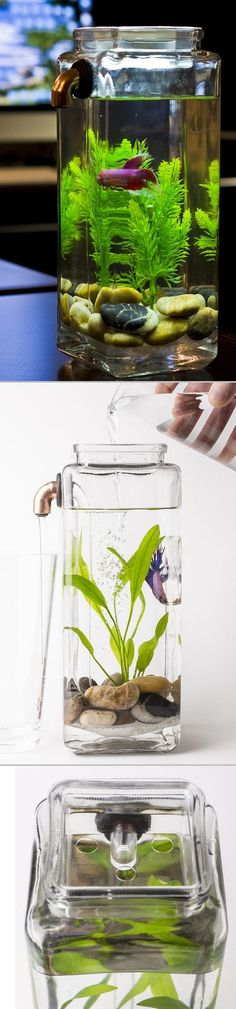 ► Self Cleaning Betta Aquarium - Simply pour fresh water in, and dirty water is expelled through a tube and out of the tank while your fish swims happily within. There are no filters, batteries, or cords.