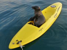 Galapagos -- if you float it, they will come. by oceana.org, via Flickr