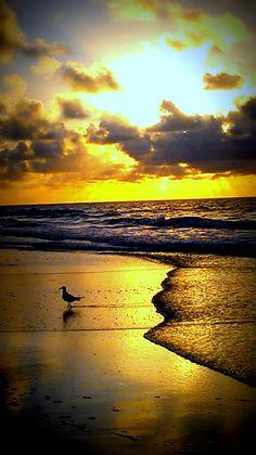 Garden City Beach, SC! What a pretty picture!