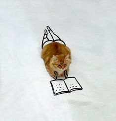Don't Disturb Me! I'm Reading A Book