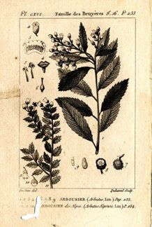 "buffon botanical french 1775 engraving 4 x 6""  $25 - 05"