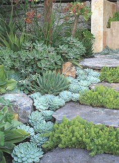 Garden Steps with Succulents! Easy to grow! Low maintence!