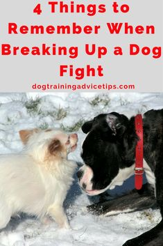 4 Things to Remember When Breaking Up a Dog Fight | Dog Training Tips | Dog Obedience Training | Dog Aggression Signs | Stop Dog Aggression | http://www.dogtrainingadvicetips.com/4-things-remember-breaking-dog-fight