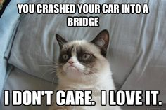 Grumpy cat didn't get the point of that song...but he liked it.
