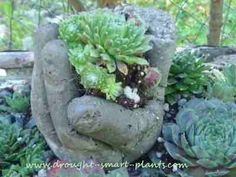 hypertufa hand with a handful of Sempervivum 'Little Bobo' Well, these are a funny little project - hypertufa hands made from (what else?) surgical gloves and your favorite hypertufa or soil cement mix. From Blue Fox Farm. Diy Garden Projects, Garden Crafts, Outdoor Projects, Hand Planters, Cement Planters, Unique Gardens, Amazing Gardens, Pot Jardin, Plantation