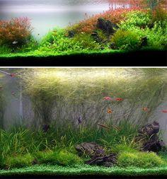 fotos de peceras con composiciones botánicas impresionantes