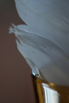 feather~photo Heather Ross