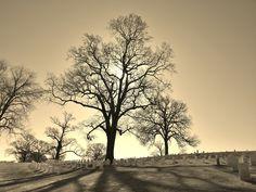 Cemetery tree.