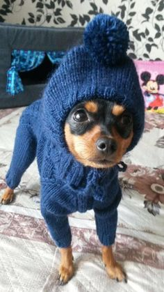Dog clothes male: dog pom pom hat and sweater, Knitted cute dog sweater, Little Dog Clothes chihuahuas Crochet Dog Sweater Free Pattern, Knit Dog Sweater, Dog Pattern, Small Dog Sweaters, Small Dog Clothes, Pet Clothes, Dog Clothing, Costume Chien, Crochet Dog Clothes