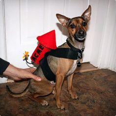 Wile E Coyote Dog Costume