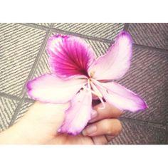 Flowers  ❤