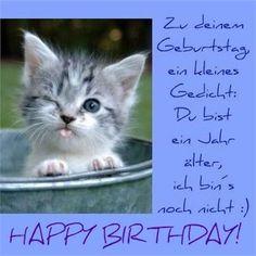 Lustige Katze Mit Geburtstagstorte Alles Gute Zum Geburtstag