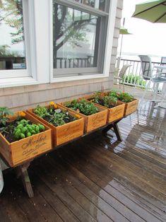 little-deck-garden
