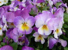 Cuáles son las flores que florecen en primavera - http://www.jardineriaon.com/cuales-son-las-flores-que-florecen-en-primavera.html