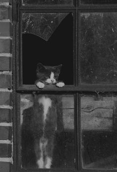 Tony's kitten (Excerpt from the sequel Hearing Things): Cobwebs dusted its ears, grime matted its fur, and its left eye wept pus. Tony stepped back, but the kitten mewed pitifully and kept on coming, pausing only when it reached his foot, where it sat trembling.