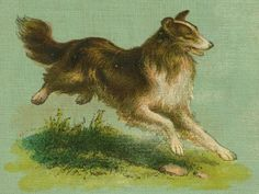 Collie on the Run    A great bit of vintage cover art - a running collie