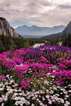 Mountains and wildflowers. Beautiful World, Beautiful Places, Landscape Photography, Nature Photography, Nature Landscape, Photos Voyages, Nature Scenes, Science And Nature, Nature Pictures