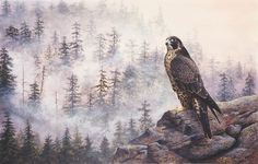 A gallery of fine art oil ,watercolour paintings of wildlife,birds & portrait works . Huge range of Greeting cards in several sizes of the natural world . Devon Uk, Peregrine, Wildlife Art, Natural World, Art Oil, Watercolor Paintings, Art Photography, Birds, Fine Art