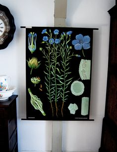 botanical chart - blue flax $150