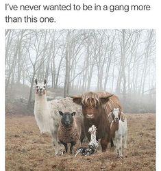Animal Gang