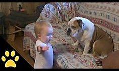 Eliminar el olor a orina de perro. ¿Sabes que es mucho más fácil de lo que creíamos? Nada de productos tóxicos, ahora todo es natural.