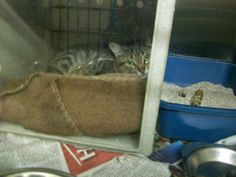 A98855 Brown tabby, Domestic Short Hair, unknown sex Found on 12/12 at N Garland Terrace and W Garland Terrance