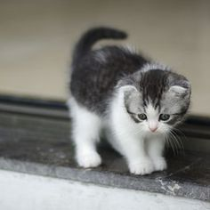 yavru kediler - Google'da Ara