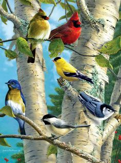 cardinals, goldfinch, bluebird, nuthatch, chickadee