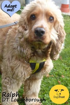 Ralph at Dogs Trust Loughborough has recently arrived at the centre and the team are currently getting to know him and what he is looking for in his new family. He will be ready to meet new owners son so if you are interested in Ralph please submit a Homefinding Questionnaire.