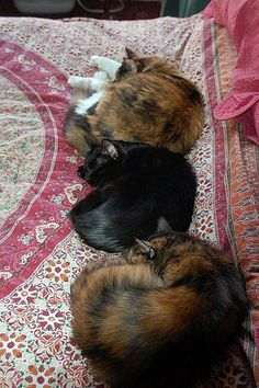 It's been unusually cold here lately and the cats are sticking together for warmth. Three Cats, Snail, Cats And Kittens, Crowd, Animals, Pet Dogs, Animales, Animaux, Animais