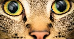 How Animals See The World http://purrform.com/animals-see-world/ #purrform #cats