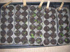 seedlings in biodegradable egg cartons