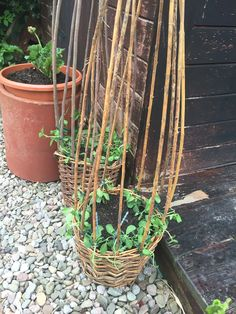 Sweet peas in willow baskets