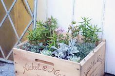 Found wine boxes + Sunday walk to the nursery = portable succulent garden.