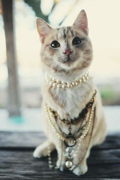 Precious Cat wearing Pearls www.MadamPaloozaEmporium.com www.facebook.com/MadamPalooza