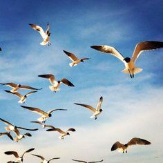 South Padre Seagulls!