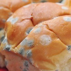 This is a guide about preventing mold on bread. It isn't any fun to be making a sandwich and discover that your bread is moldy. There are a number of ways to prevent your bread from molding.